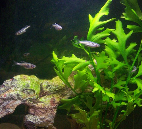 Stocking a 10 gallon freshwater fish tank what fish are for 10 fish are in a tank riddle answer