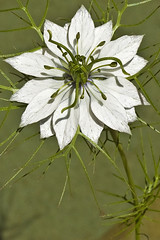 Study in white and green