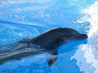 Bilde av Dolphin Habitat. geotagged lasvegas dolphin habitat themirage geo:lat=36120368 geo:lon=115177897