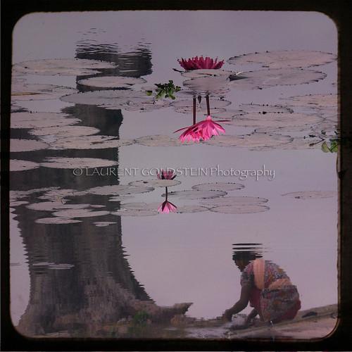 pink people woman india flower water mystery asia lotus dream shanti mythology bihar भारत fivestarsgallery indiasong hourofthesoul creattività mirrorser