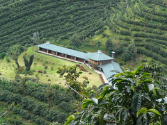 agriculture, village, mountain, hill station, estate, terrace, aerial photography, rural area, plantation,