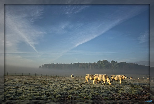 morning sunrise cow belgium 1020mm hdr 5exp pentaxk10 salzherz