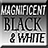 the Magnificent BW group icon