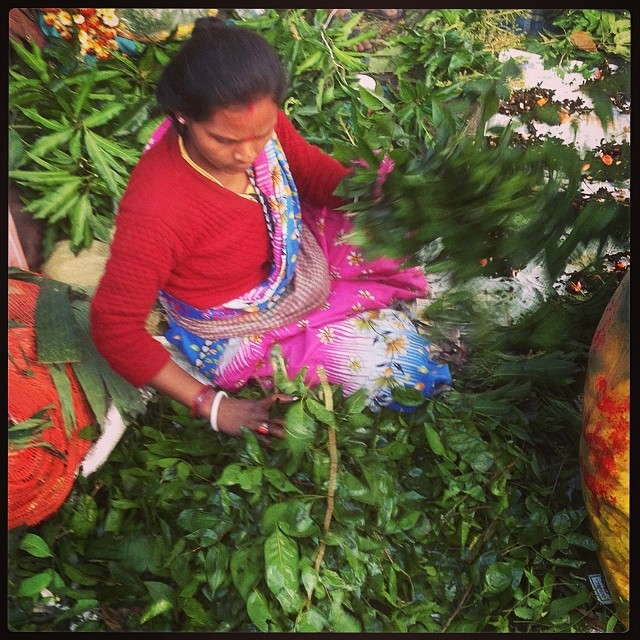 Sorting out the leaves in the #kolkata flower market