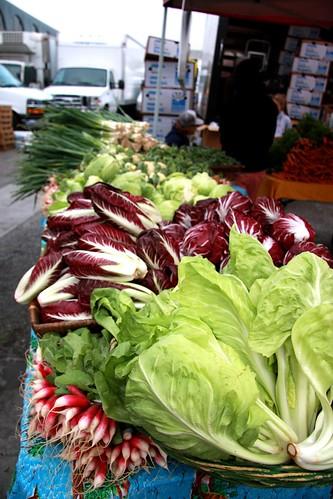 Lettuce, radishes, Treviso radicchio