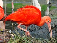 Vogelpark Marlow Okt 2008