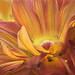 Orange Sherbert by ldmadeson