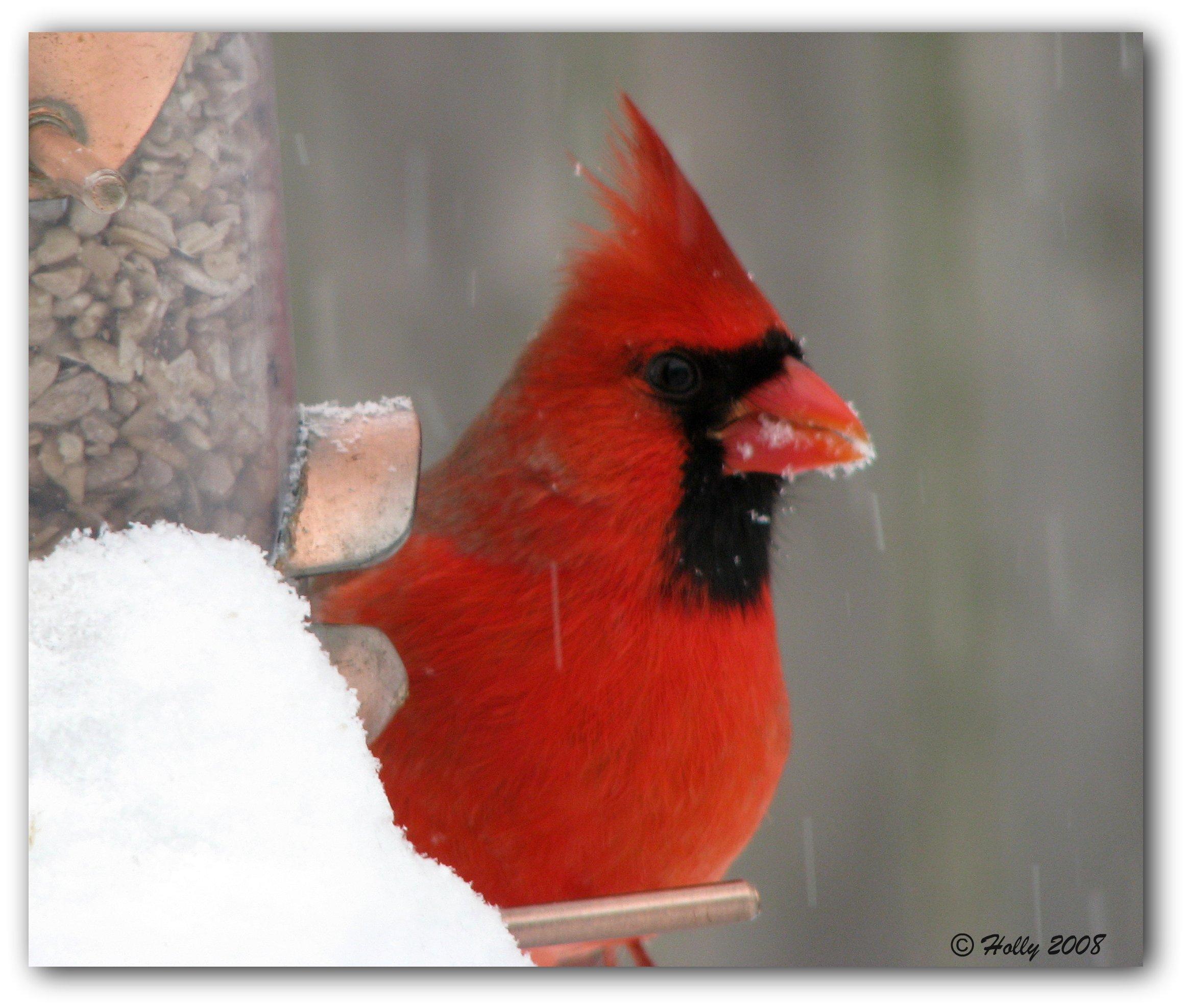 Red Fruits Cardinal Cake