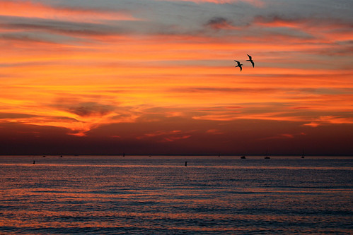new york sunset sea sky cloud ny newyork color beach nature water birds clouds canon way fly flying colorful flight shore cedar xsi fahid