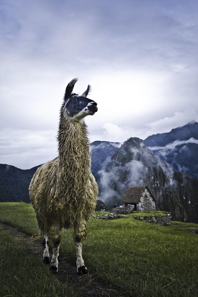 Camino Inca a Machu Picchu http://www.caminoinca.org/