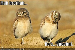 funny-pictures-owls-twisted-head