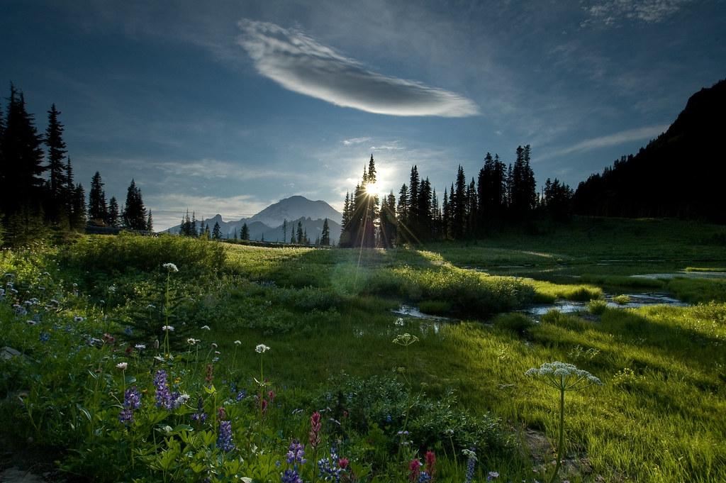 tipsoo meadow