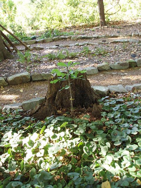 Huntsville Alabama Botanical Gardens Flickr Photo Sharing