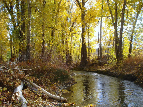 wood trees light sun reflection fall water yellow river autum idaho valley sunvalley