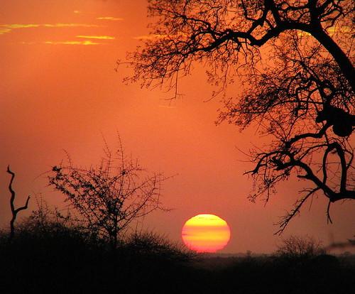 africa morning sky sun plant tree silhouette sunrise southafrica dawn soleil silhouettes explore ciel za siluetas südafrika krugernationalpark kruger satara knp 非洲 afriquedusud lafrique zuidafrika leverdusoleil sudáfrica explored zuidafrica sandraleidholdt suráfrica leidholdt sandyleidholdt