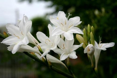 Flores Blancas | Flickr - Photo Sharing!