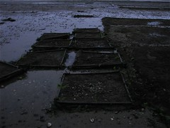 Shellfish cages