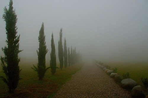 Path in the fog