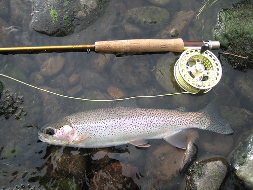 December fly fishing on the middle fork willamette a for Alsea river fishing report
