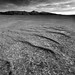 Ripples on the Playa, Black Rock Desert, Nevada by davidkiene