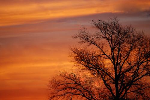 sunset sky usa tree beautiful wow wonderful us newjersey nice fantastic nikon unitedstates gorgeous awesome great nj dramatic stunning excellent lovely 2008 splendid welldone 55200mm unionbeach views100 d80 neloesteves warmsunset anawesomeshot bloggedasthe