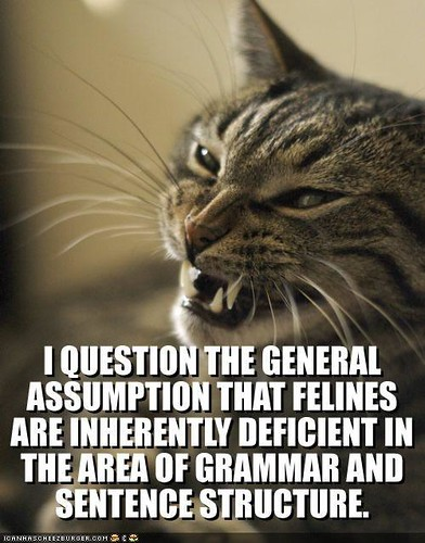 funny-pictures-angry-cat-questions-lolspeak
