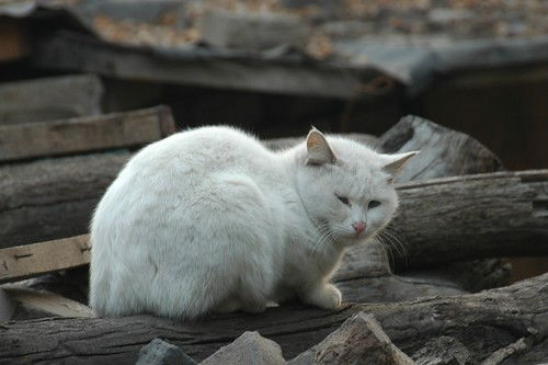 Fat Cat - Pingyao, China