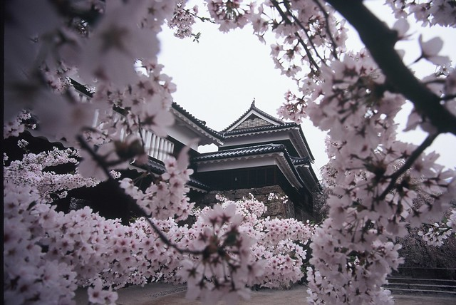 上田城-櫻千本