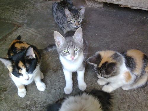 A história da domesticação dos gatos - PetLove