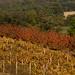 Automne dans les Monts du Lyonnais ©mll