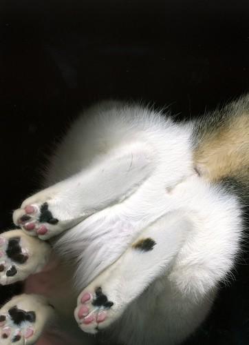 Cat Scan!