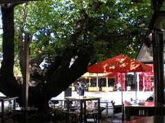 Big Tree in the Bar