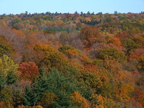ohio cleveland littlemountain kirtland holdenarboretum sharonconglomerate sedimentarybedrock treehugger007