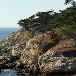 View from Lone Cypress