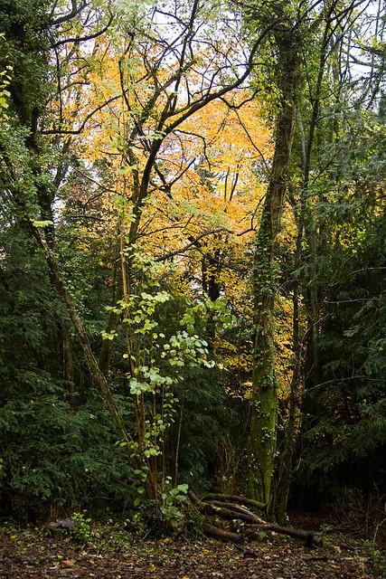 Devilsden Wood