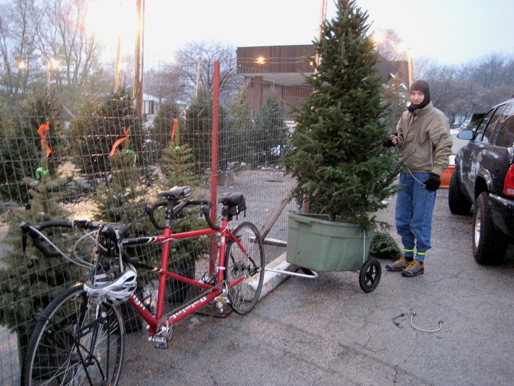 Rob strapping Christmas tree into bike trailer