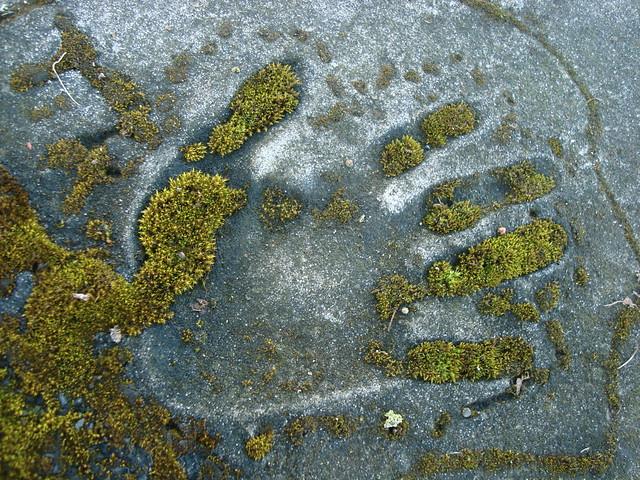 Mossy Handprint
