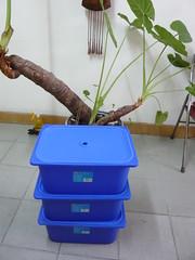 beijing worm compost bin prep