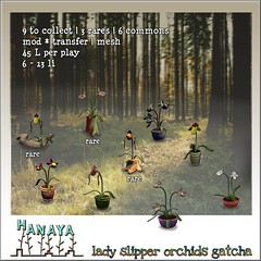 -Hanaya- Lady Slipper Orchids GATCHA