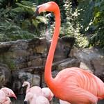 Los Angeles Zoo 001