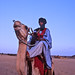 Touareg boy on camel