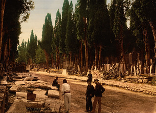 Cypresses and road leading to the cemetery, Scutari, Constantinople, Turkey, ca. 1895