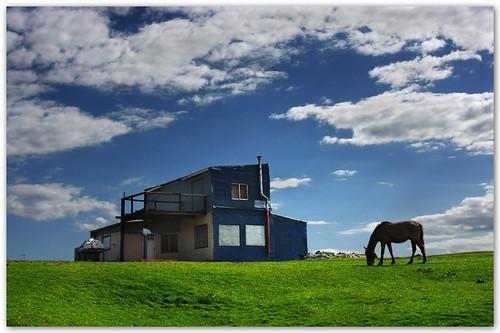horse house caballo uruguay rancho cabopolonio rocha alhambra2006 silviadeluque welcometoanewday