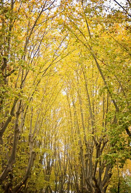 l'ingiallirsi delle foglie