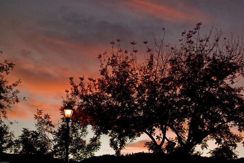 sunset tree napa