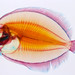 xray of a fish with dye added from Academy of Science, San Francisco by tbSMITH