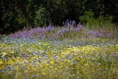 Small flower patch
