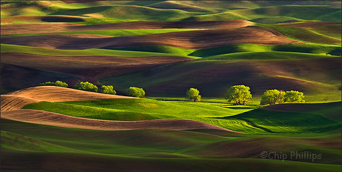 Row of Trees, Palouse