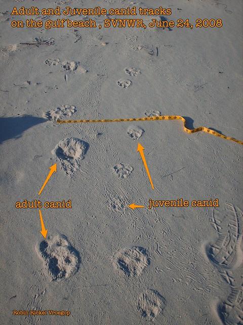 adult tracks