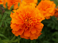Mom's flower gardens